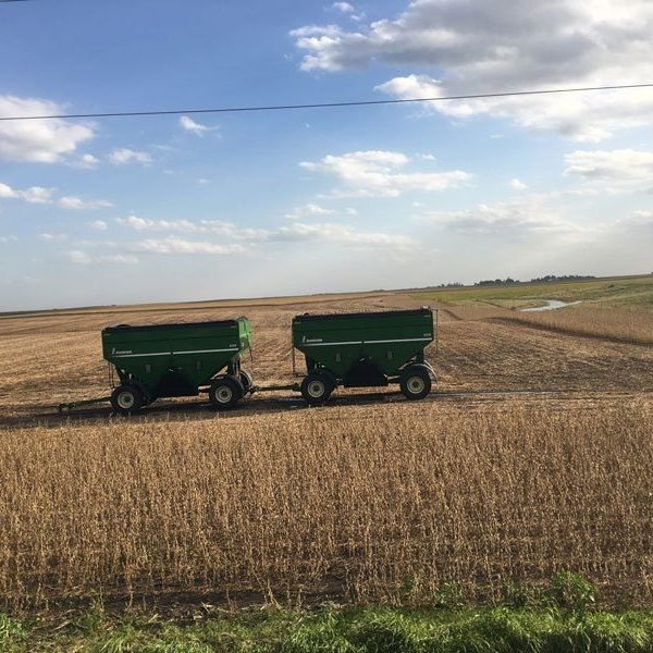 Two Brent grain carts with new replacement roll tarps installed.